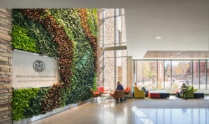 csu living wall